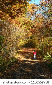 A girl walking in Fall Foliage in Addison County, Vermont