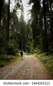 Girl walking on trail in the forest. Woman walking in nature. Hiking in forest. Backpacking through forest.