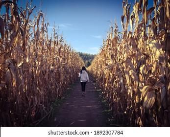 Girl walking through corn maze at Mazezilla in Pennsylvania
