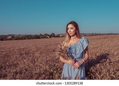 Girl in a wheat field in the summer in a blue dress and wheat in the hand of ears of corn. A woman walks across the field, long hair casual makeup. Free space for text.