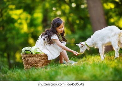 A girl in a white dress is feeding with a vegetables  white yeanling on a leash, sitting on the edge of the forest in the rays of the sunset
