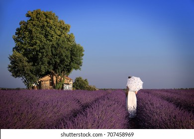 A girl in a white dress holding an umbrella walking towards an old house amidst lavender. Provence, France.