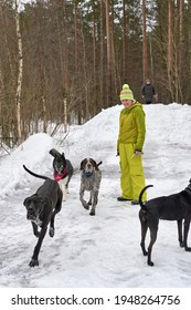 A girl in a yellow winter suit walks a lot of big dogs in the woods