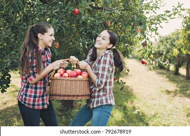 Girls with Apple in the Apple Orchard. Beautiful sisters with Organic Apple in the Orchard. Harvest Concept. Garden, teenagers eating fruits at fall harvest.