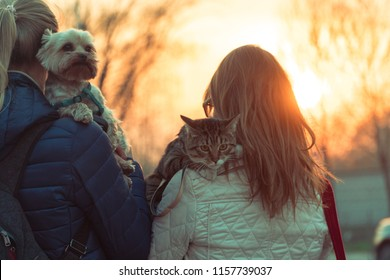 Girls cross the road with a cat and a dog