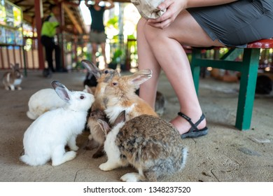 Girls feeds rabbits in zoo