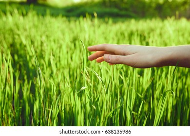 The girl's hand strokes the green grass