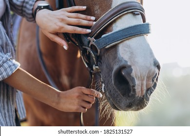 Girl's hand stroking a horse, close up