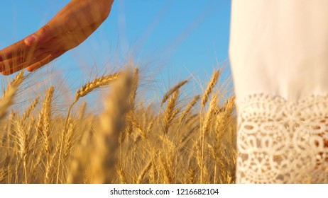 girl's hand touches yellow ears of wheat, girl in white dress walks field of golden wheat, slow motion, close-up