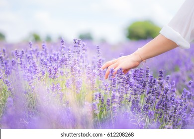 Girl's hand touching and waving over the Lavender field on a nice blurry background