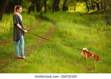 Girls holding a dog leash Shiba Inu in Spring Park. Walking with a pet. Pedigree dog. Dog walking.