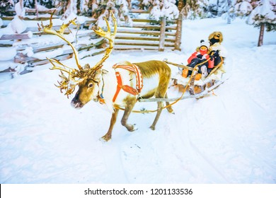 Girls in Reindeer sleigh in Finland in Lapland in winter.