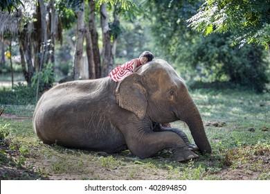 The girls were sleep on the back of the elephant, Elephant village Thailand.
