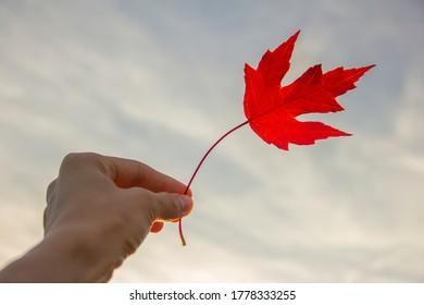 A girl's (woman's) hand holding bright red autumn maple leaf on the sky background