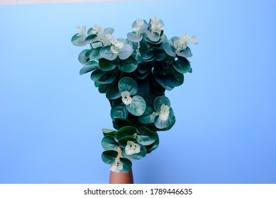 Give flowers abstract blue background