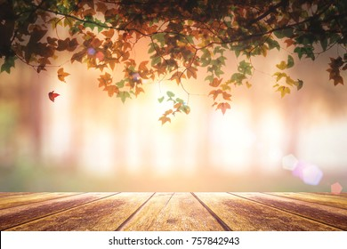 Give thanks concept: Wood table with colorful maple branches border on early morning nature background