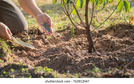 Giving fertilizer to a young tree