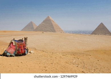 Giza Pyramids, Cairo - Egypt:  A tourist rider camel rests in front of the pyramids