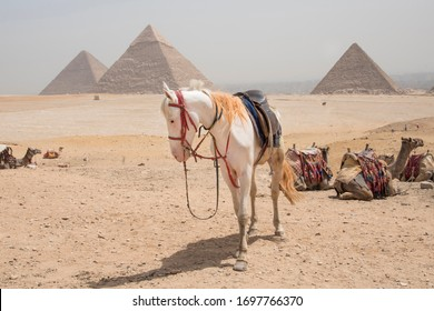 Giza pyramids, next to Cairo in Egypt, Africa. Huge and historic buildings.