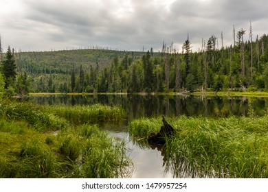 Glacial lake Laka in National Park Sumava. Cloudy summer day.