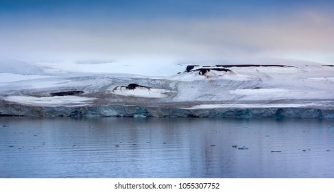 Glaciology. 900 km from North Pole. Franz Josef Land - glaciers in Strait of Booth and American Strait. Front wall of glacier, ablation area