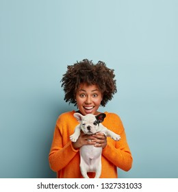 Glad dark skinned young lady with Afro haircut, holds small puppy in both hands, rejoices to get pedigree dog, wears casual orange sweater, isolated over blue background with copy space above