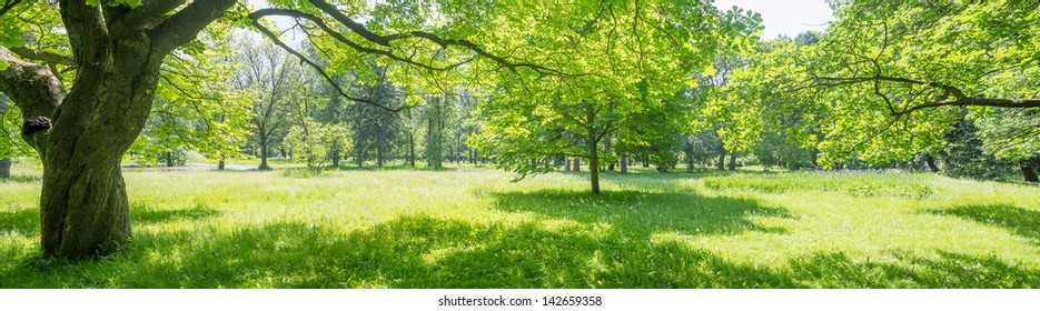 Glade in the forest with sunlight. Brightly shined deciduous wood, oaks and chestnuts are visible