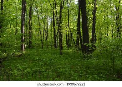 Glade with fresh grass in green forest in the beginning of summer