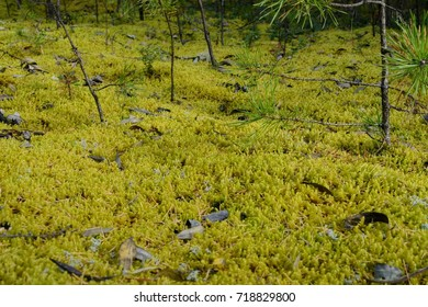 Glade with moss.