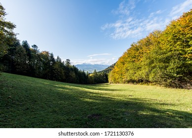 glade with a view of the Tatra mountains