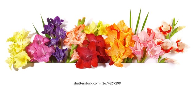 Gladiola Flower Panorama on white Background