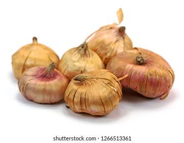 Gladioli onions, isolated, white background