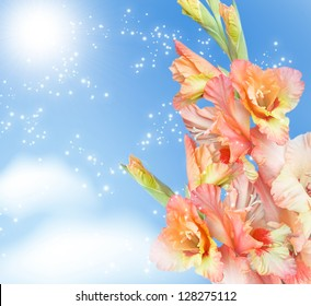 Gladiolus blossom on the sky background