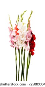 gladiolus flower on white background