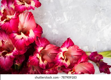 gladiolus flowers  on a grey background with space for text