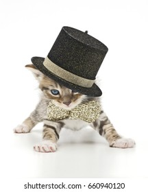 glamorous kitten with cylinder and bow