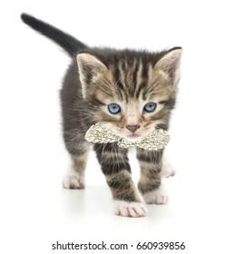 glamorous kitten and sparkling bow
