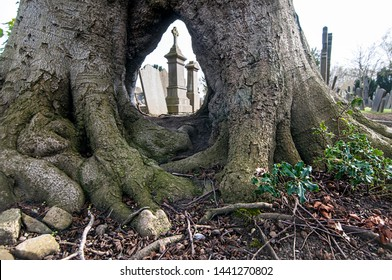 GLASNEVIN CEMETERY . DUBLIN. IRELAND - April 13 ,2019 : View through the arch of old tree on the gravestones