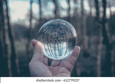 Glass ball display forest , abstract meaning fortune journey magic crystal ball.
