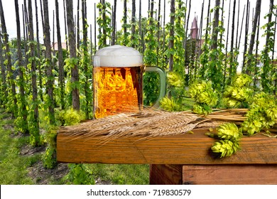 Glass of Beer with Barley and Hops