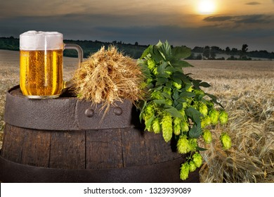 Glass of beer with hop cones in the baley field.