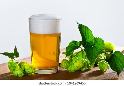 Glass of Beer with Hop Cones on the Desk