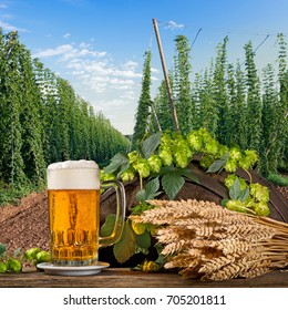Glass of Beer with Hop Cones and Wheat