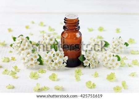 Glass bottle essential oil white flower stock photo edit now glass bottle with essential oil white flower blossom scattered herbal wellness mightylinksfo
