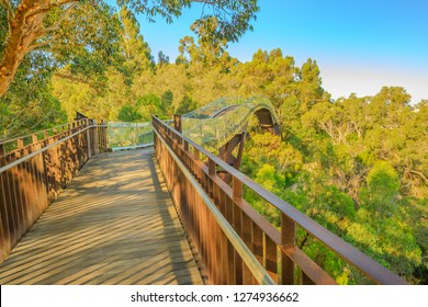 Glass bridge in Kings Park, Perth city, Western Australia. Sunny day, blue sky. Tree top walkway at Botanical garden, the most popular visitor destination in WA.