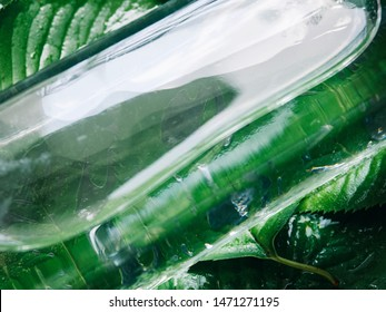 Glass carafe and green leaves