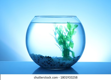 Glass fish bowl with clear water, plant and decorative pebble on blue background
