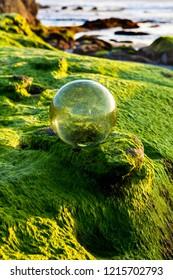 glass fishnet float on mossy shore