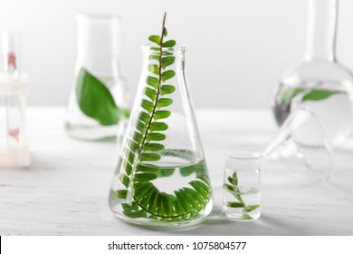 Glass flask with plant on table in laboratory