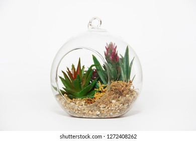glass florarium with green plants on white background